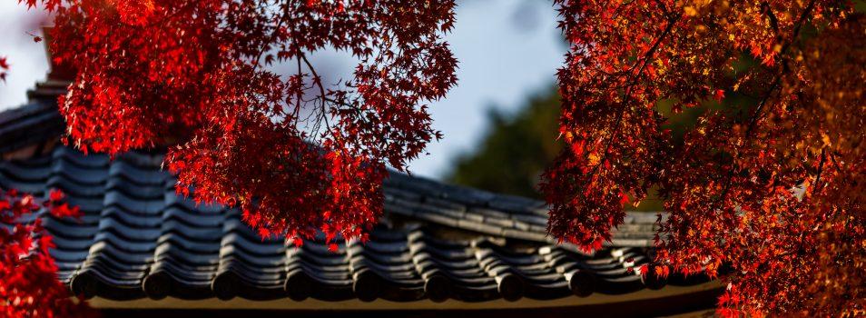 豊作!京都西山で紅葉狩り2018