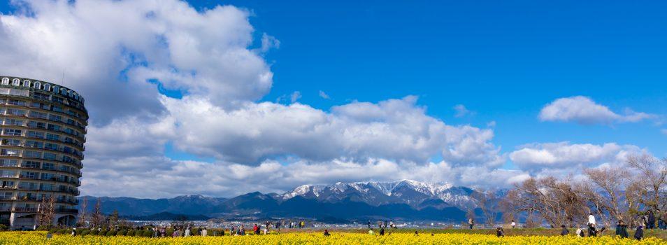 冬と春が同居する景色。雪山と早咲きの菜の花の コラボを撮影